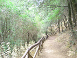 Agios Antonios gorge walking path