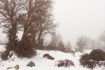 Xmas in the snow at 1400 m. altitude