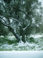 Highlight for Album: winter pictures of Crete
